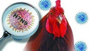 China Confirms First Cured H7N9 Serious Patient