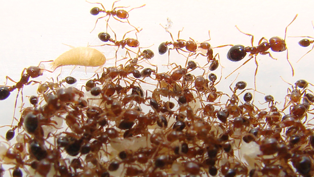 How to get rid of ants outside your home