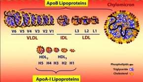 What is Cholesterol Levels, Ratio? LDL, HDL, High, Lower