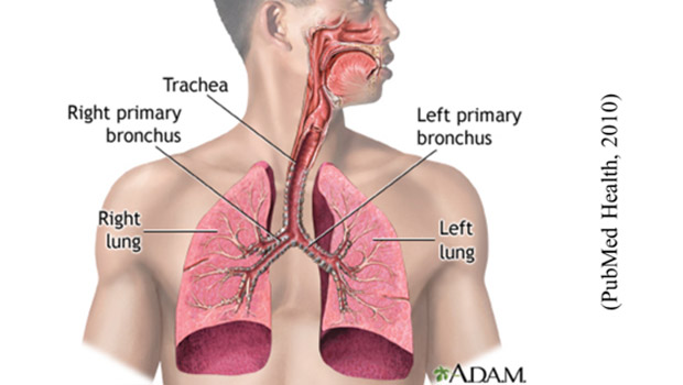 What is Lung Cancer? Type & Statistics of Lung Cancer